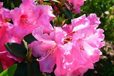 新緑がまぶしい季節(ヒロサワ)